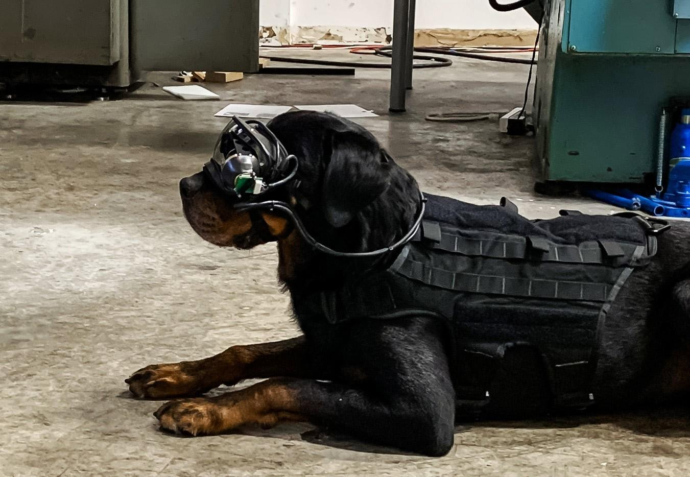 The AR goggles are designed to overlay visual cues onto the animal's field of vision allowing handlers to command the dogs remotely