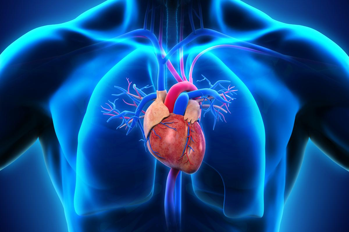 New research shows that exposure to silicon-based nanoparticles may negatively influence cardiovascular health (Image: Shutterstock)