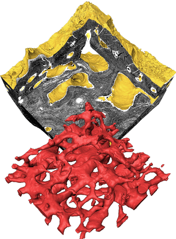 The researchers examined the heterostracan skeletonclosely using Synchrotron Tomography to identify the structure and finally determine what type of tissue aspidin is