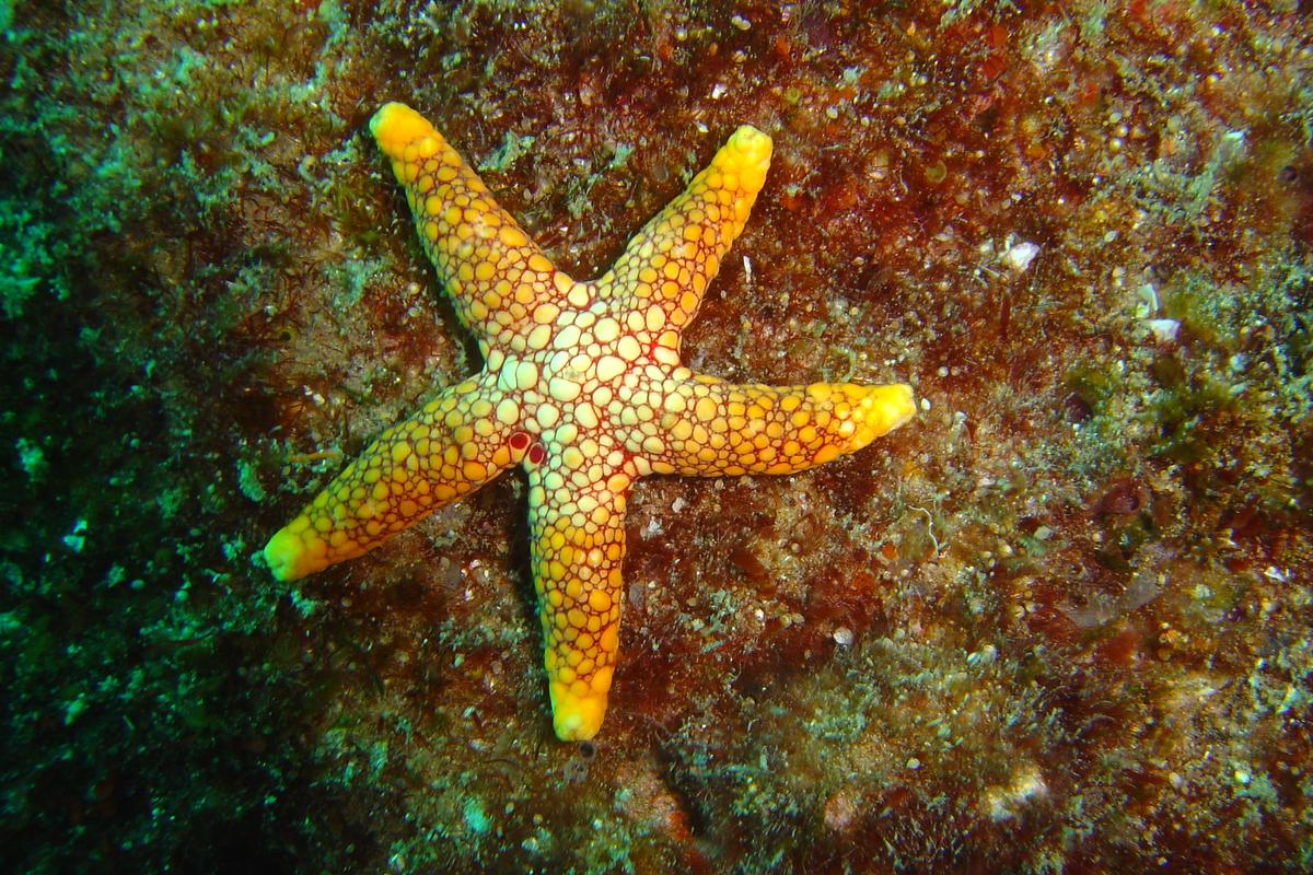 A starfish's body shape causes water flowing in from the side to be diverted upward, pushing the animal down