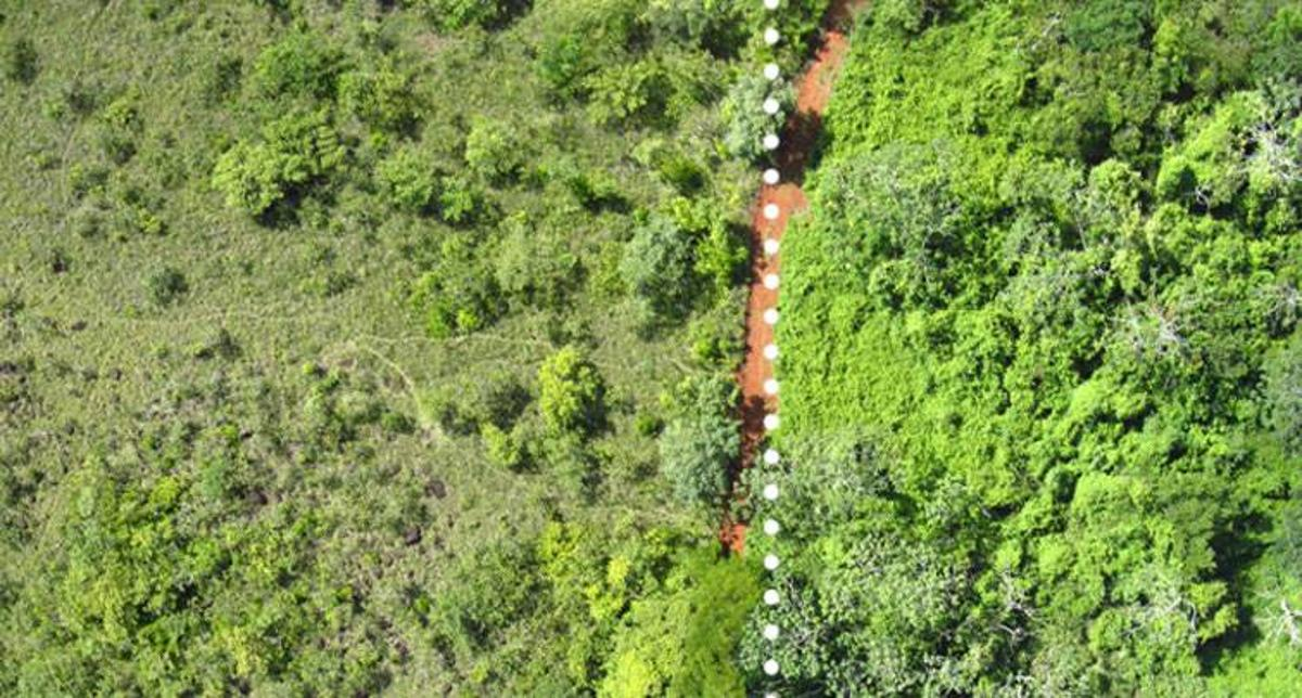 On the right is the lush forest that was loaded with orange peel waste and on the left is the untreated land