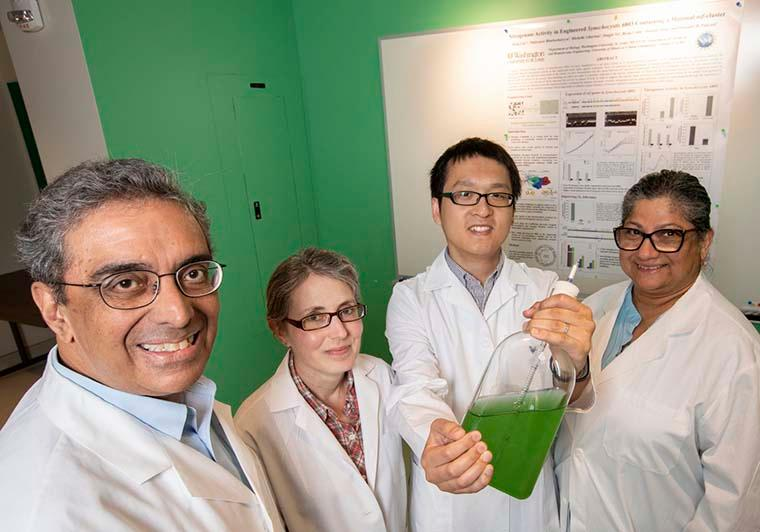 Researchers on the team, from left: Himadri Pakrasi, Michelle Liberton, Deng Liu and Maitrayee Bhattacharyya-Pakrasi
