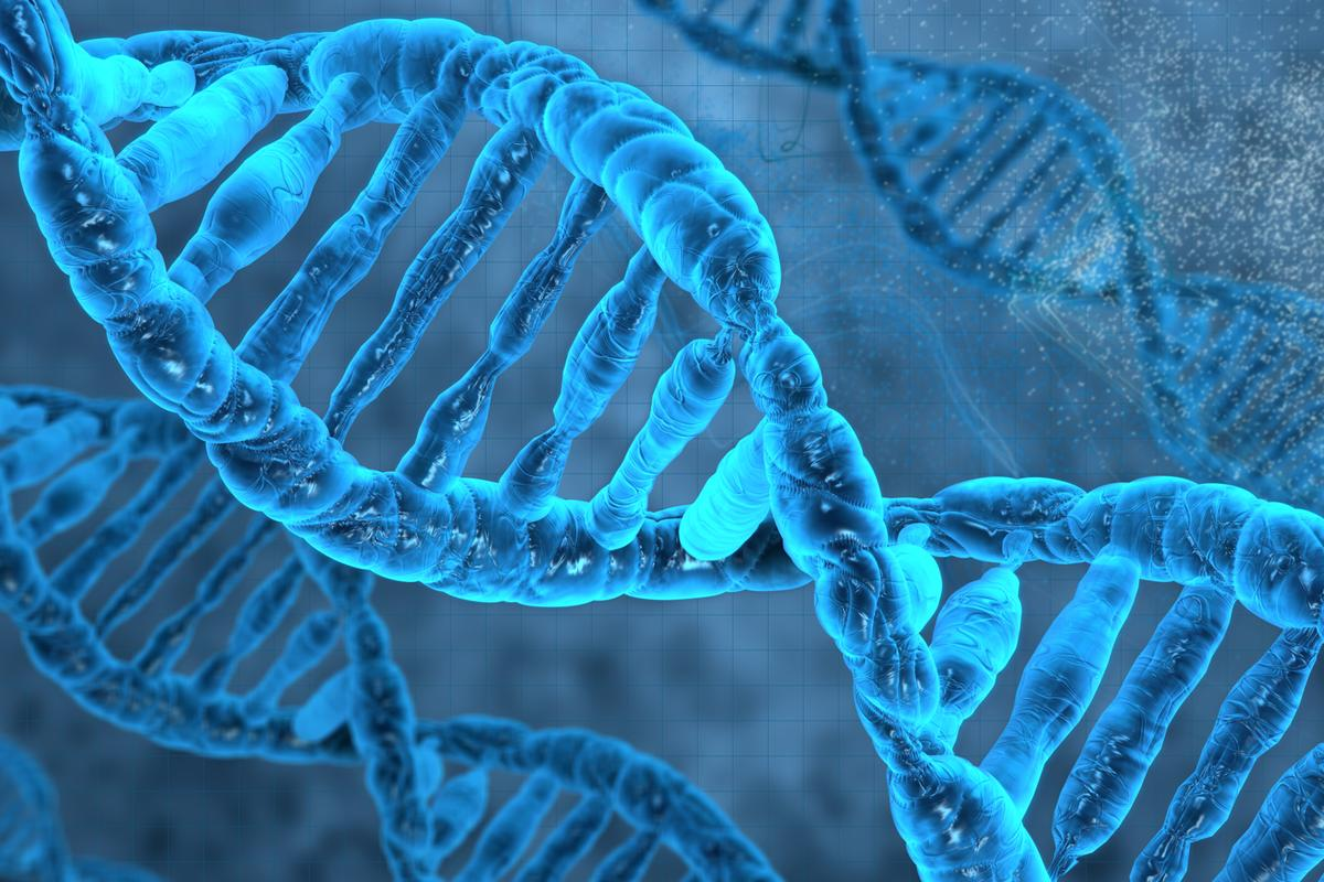 US researchers have engineered a bacterium whose genetic material includes DNA or bases not found in nature (Image: Shutterstock)