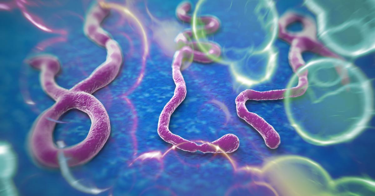 New universal vaccine targets all four Ebola species that infect humans