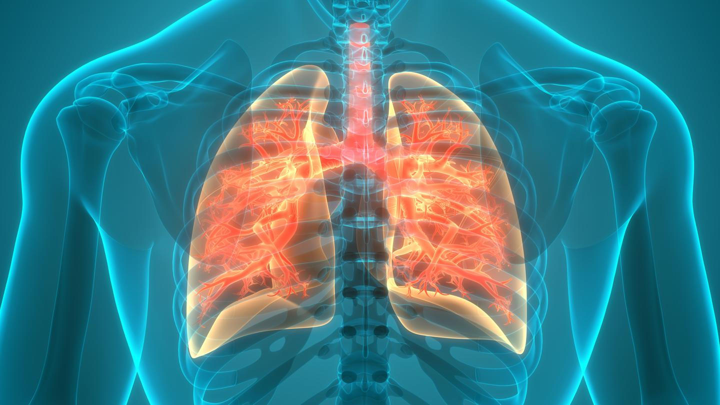 A new study is the first to investigate a link between the gut microbiome and chronic obstructive pulmonary disease (COPD)