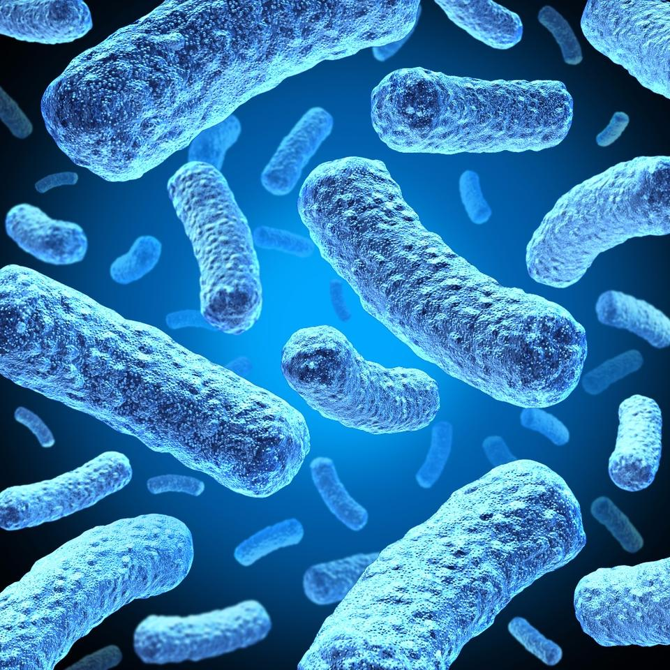 Researchers have found that predatory bacteria can help fight off infections of other bacteria in the body