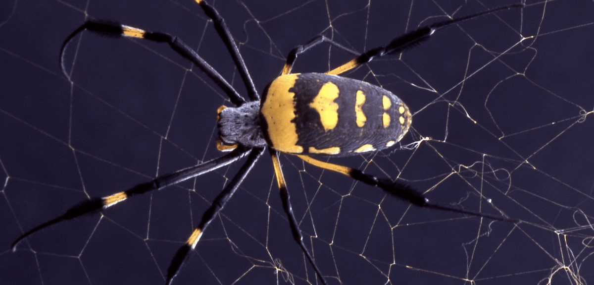 Scientists have created a new 'hybrid' material inspired by spider silk