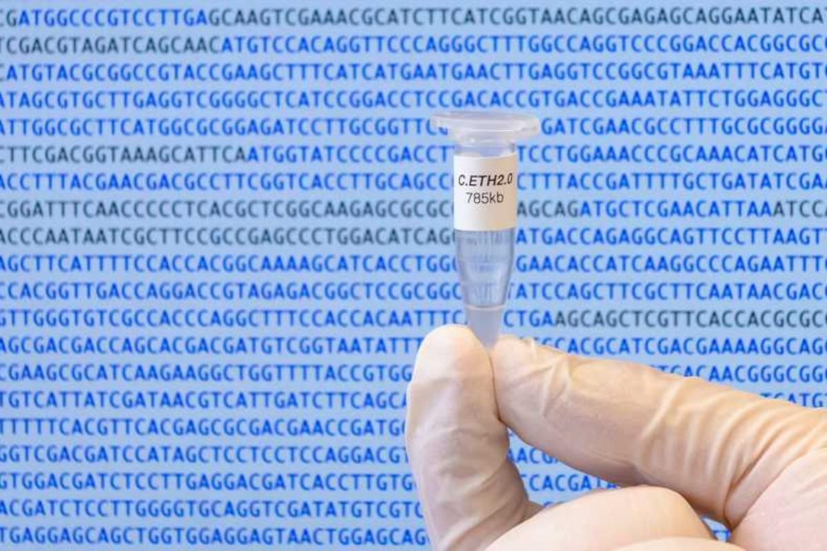 Scientists have created the first computer-generated genome of a living organism