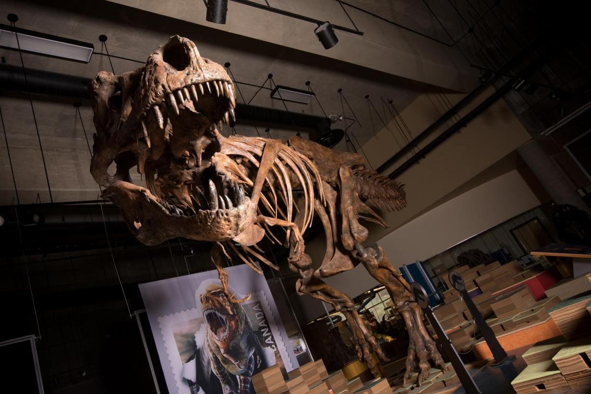 """""""Scotty"""" was 13 meters long (42.7 ft) and weighed an estimated 8,800 kg (19,401 lb)"""