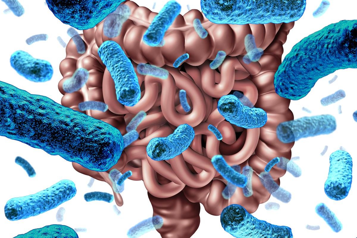 For the first time scientists have demonstrated how gut bacteria disruptions can alter intestinal serotonin production and change blood sugar levels