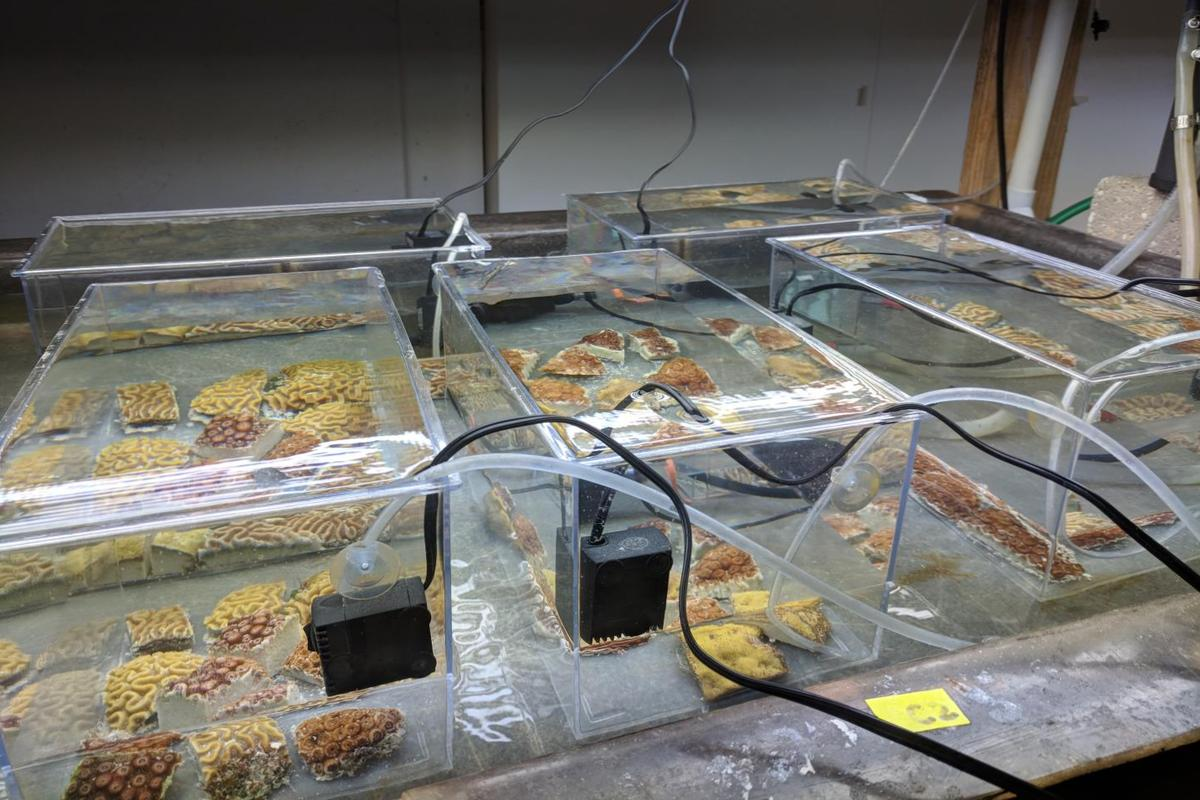 Some of the coral tanks used in the study