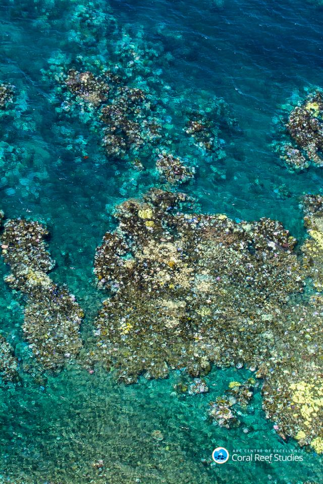 Photographs of the Great Barrier Reef coral bleaching stretching from Townsville to Cairns