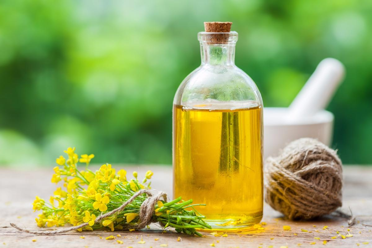 While canola oil, from the rapeseed plant shown here, can be healthy for our hearts, it might not be so good for Alzheimer's disease
