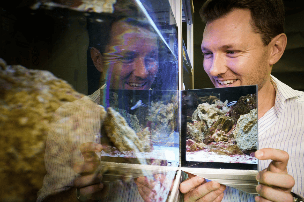 Researcher Alex Jordan administers the mirror test on cleaner wrasse fish