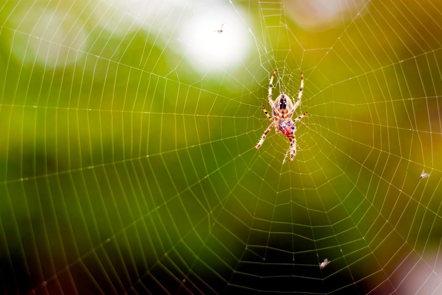 Spider silk could hold the key to more sensitive microphones