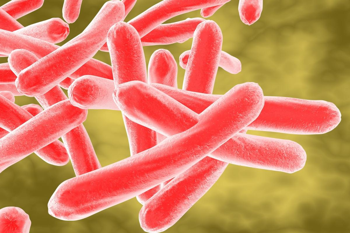 A new compound could knock out tuberculosis bacteria's resistance to antibiotics