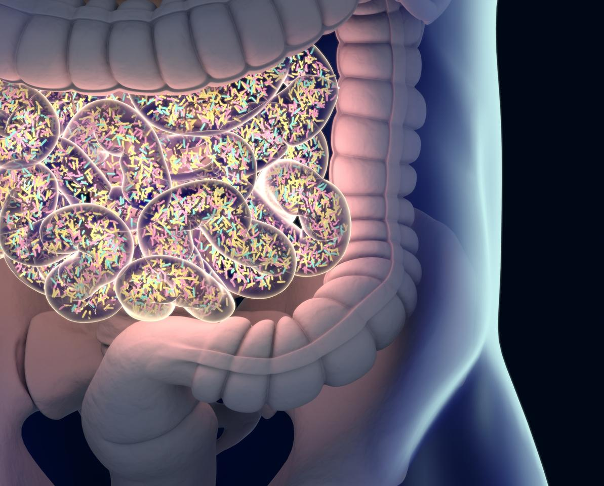 New research found supplements of a specific strain of gut bacteria helped regulate appetite and stress hormones