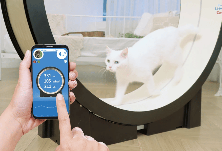 The Little Cat is a smart treadmill for cats