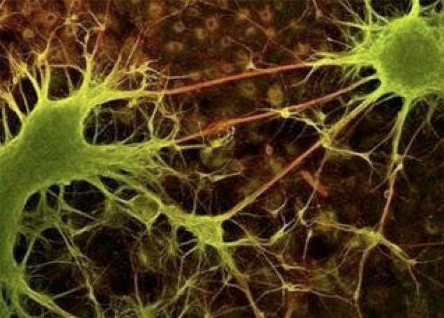 """UCLA neuro-physicists have discovered that changes in synaptic strength have an optimal """"rhythm,"""" or frequency"""