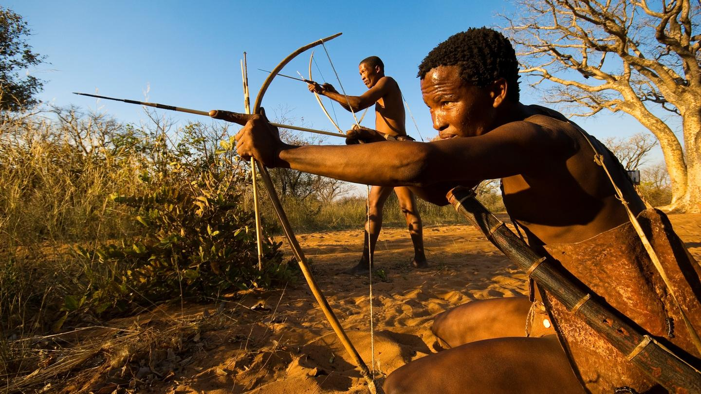 A poison used on arrow tips by ancient African tribes is inspiring a new compound that could herald a male contraceptive pill