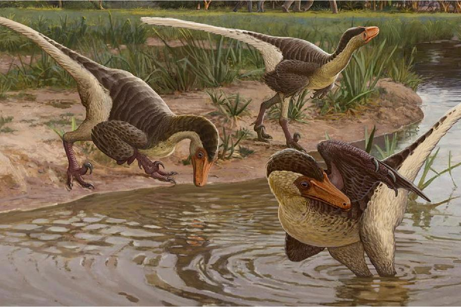 Dineobellator lived considerably farther south than most raptors, which were typically found in the northern US, Canada and Asia