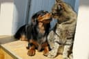 A new study, said to be the first of its kind, has revealed how pheromone products can promote more harmonious relationships between cats and dogs
