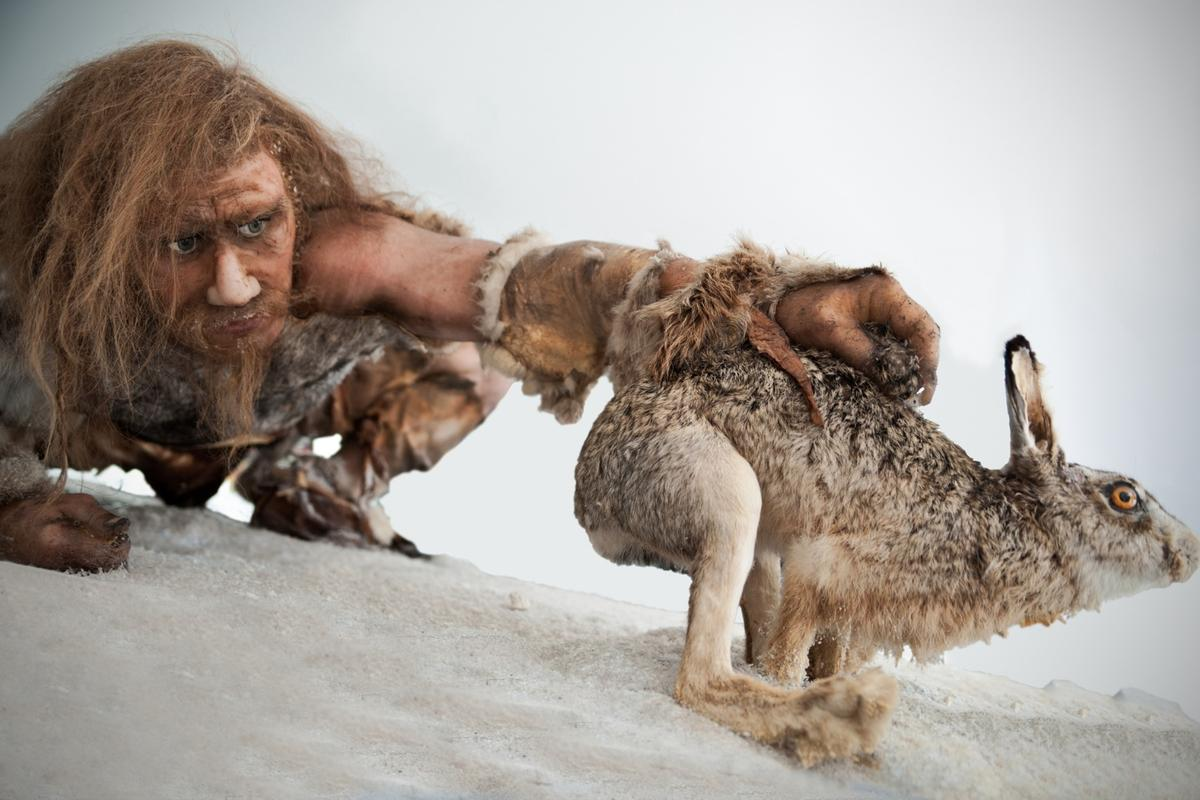 The team found evidence that the caveman consumed a balanced diet of starchy carbohydrates from raw plants and meat