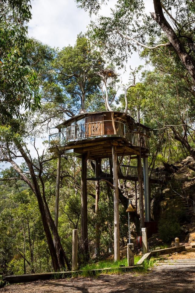 "Lionel Buckett on the Blue Mountains Cabins Treehouse: ""It's built around a turpentine tree on land adjoining the world heritage area of Wollemi national park."" (Photo: Noel McKeegan/Gizmag)"