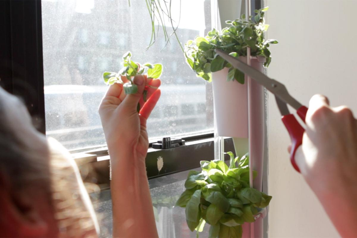 The Windowfarms project has developed a new version of its indoor gardening system - where nutrient-rich liquid soil is fed to plants arranged in a column at regular intervals