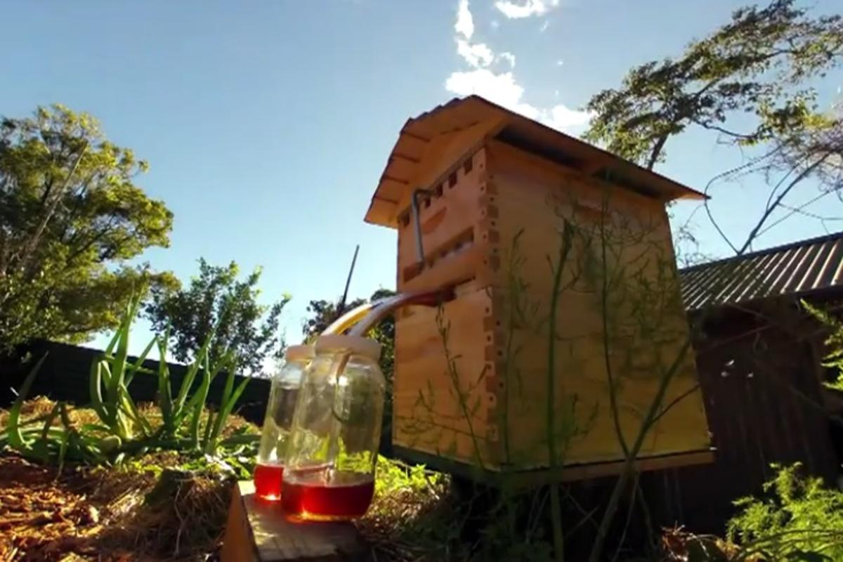 The Honeyflow allows honey to be siphoned straight from a beehive without opening the lid or disturbing the bees inside (Photo: Honeyflow)