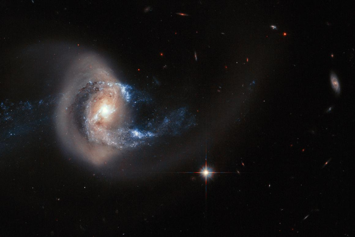 Hubble composite showing the larger galaxy NGC 7714 having its structure deformed by the neighbouring galaxy NGC 7715, out of frame (Image: ESA, NASA)