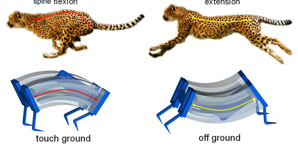 Soft-bodied robot channels the cheetah to move fast