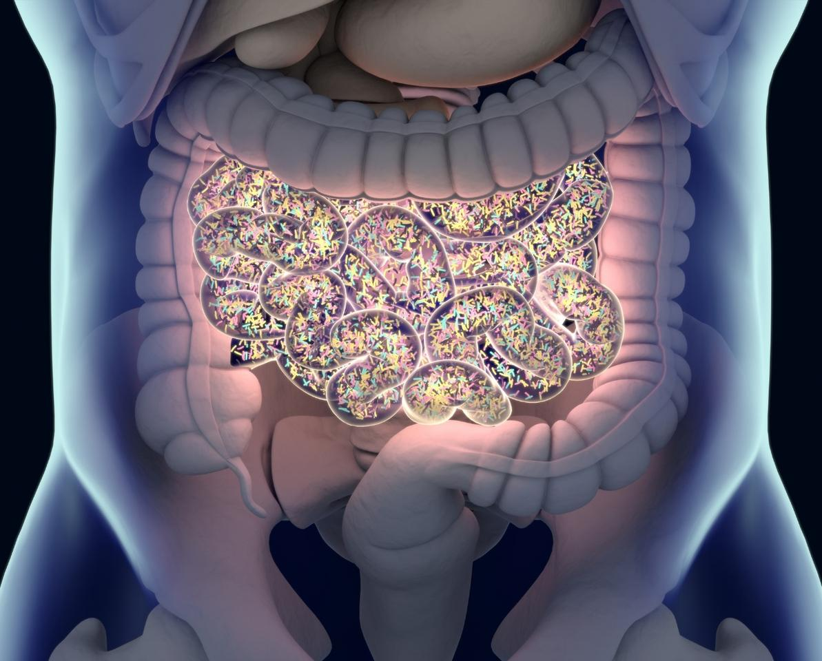 A new study has shown that probiotics can evolve in the gut and potentially turn against the host