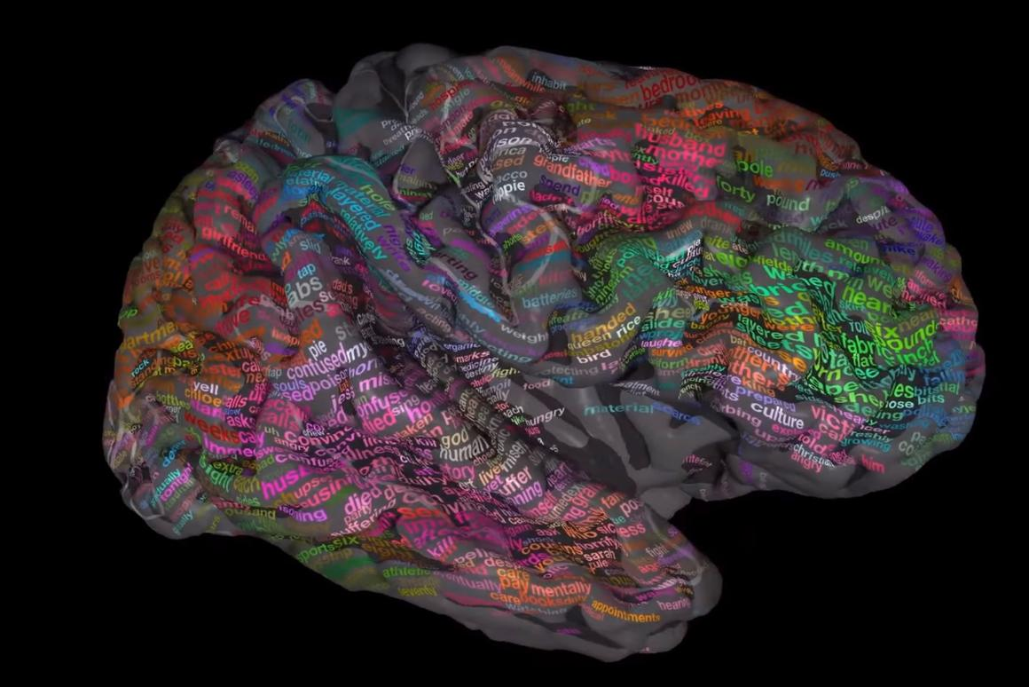 The research reveals that at least a third of the brain's cerebral cortex is involved in processing language