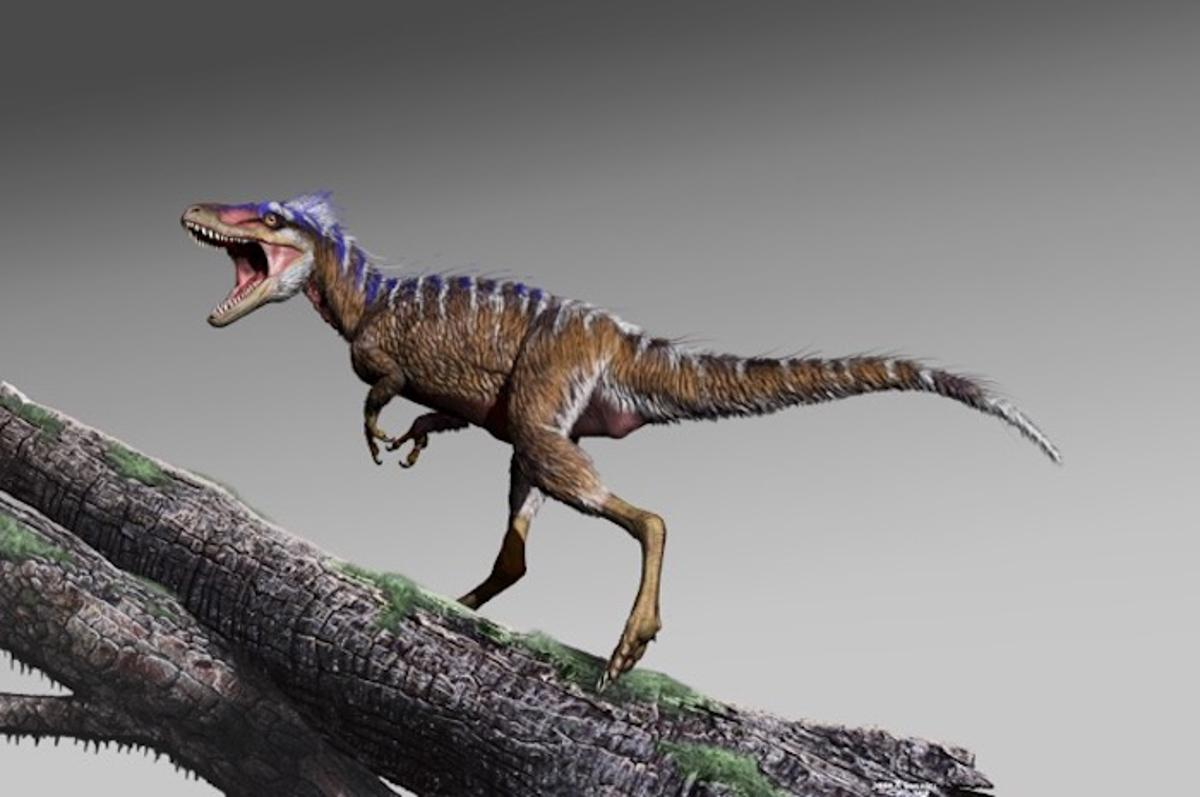 A newly-discovered species of tyrannosaur, named Moros intrepidus, was tiny at just 1.2 m (3.9 ft) tall and weighing only 78 kg (172 lb)