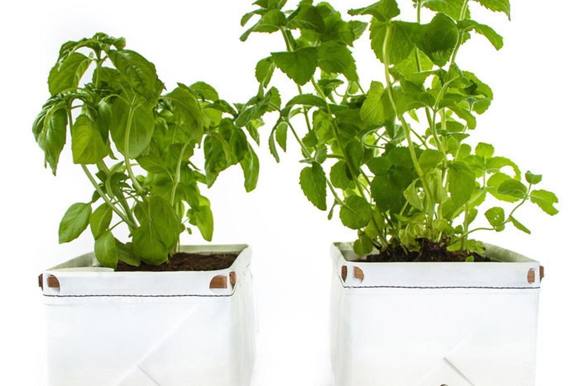 Patch is a new self-watering herb planter seeking funding on Kickstarter