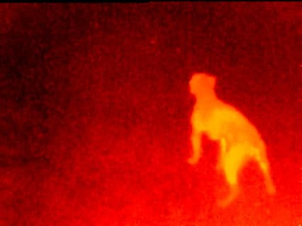 Seek Thermal detecting an animal in the dark