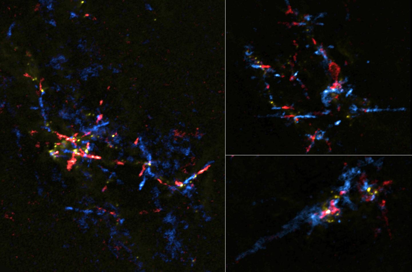 """A false color image highlights the outflows of gas from """"stellar eggs,"""" indicating star formation"""