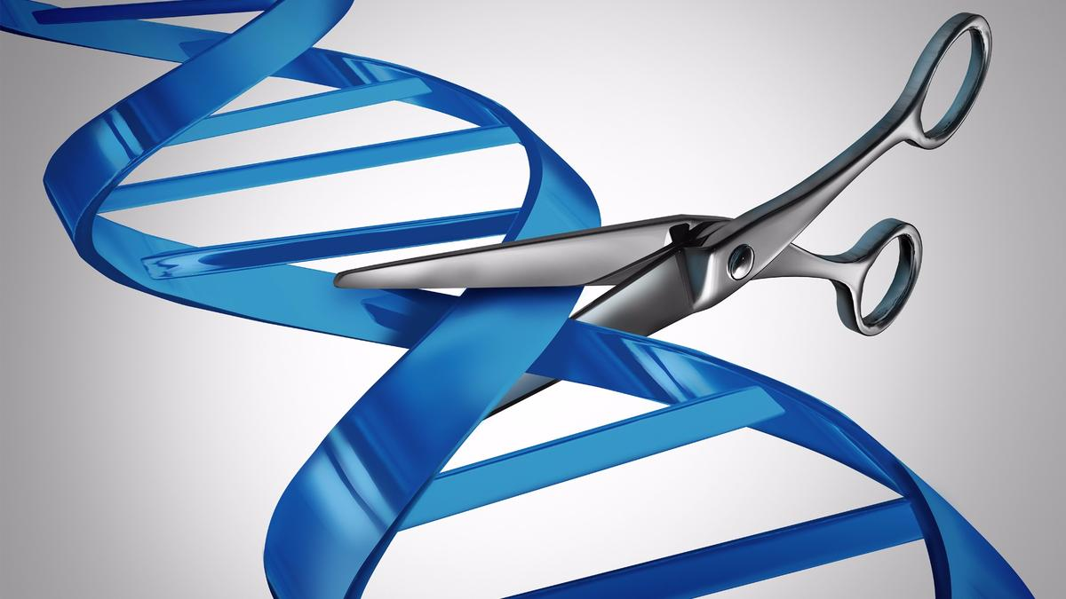 A new study has found that CRISPR gene-editing may have unintended genetic side effects