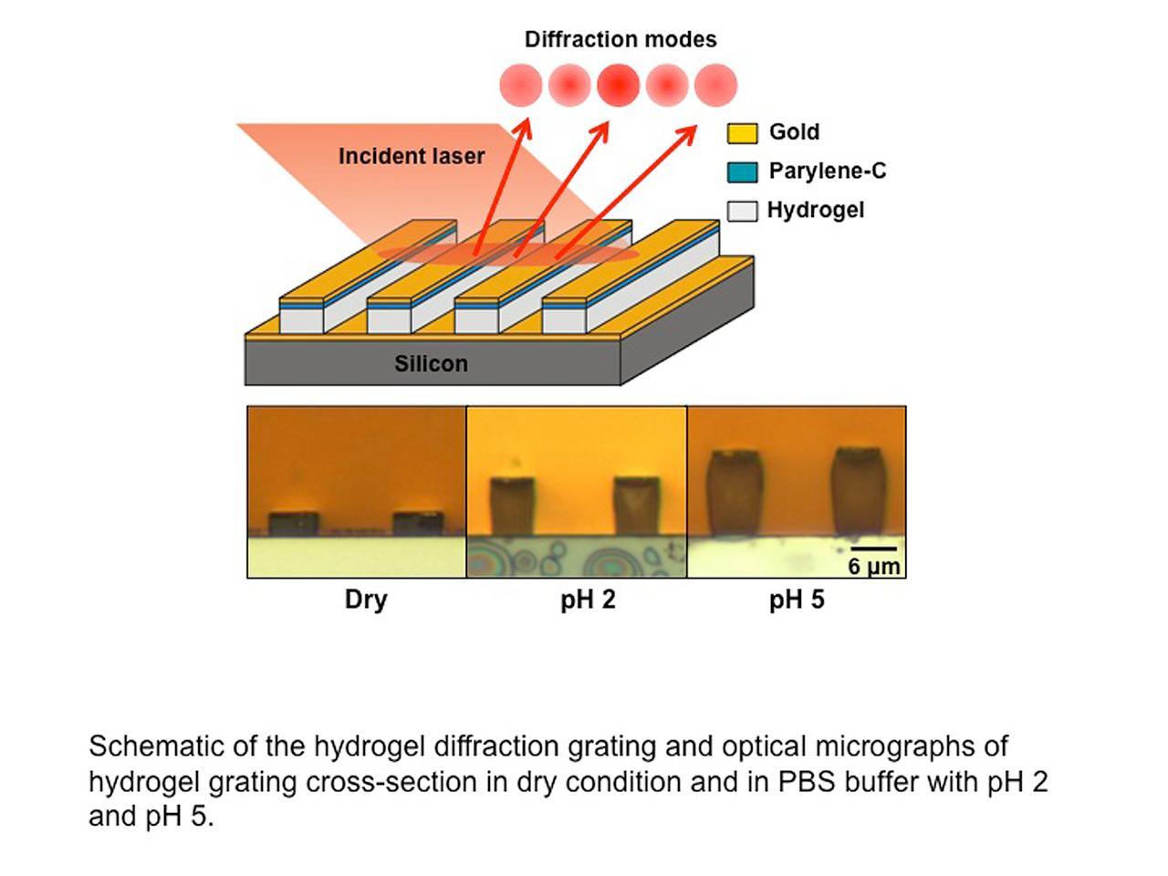 A diagram illustrating how the hydrogel sensor works (Image: Birck Nanotechnology Center, Purdue University)