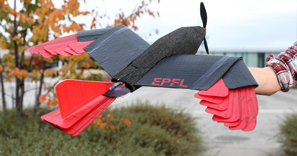 Feathered drone uses morphing wings and tail to fly like a raptor