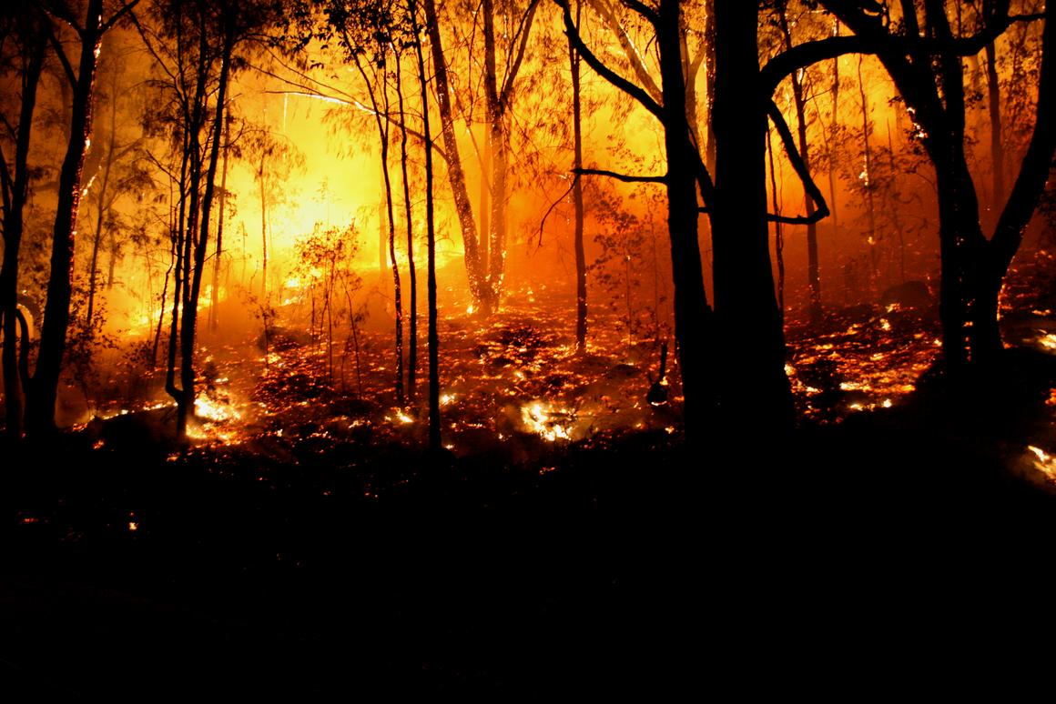 Australia had its hottest year on record in 2019, resulting in catastrophic bushfires