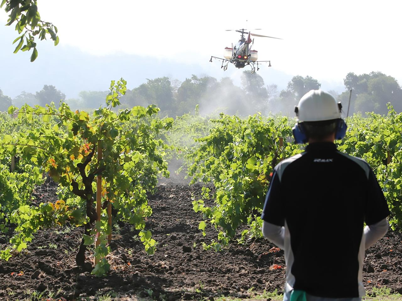 Yamaha's unmanned helicopters have now been engaged spraying agrochemicals since 1989, and Yamaha helicopters now spray more than 40 percent of the total rice paddy cultivation area in Japan
