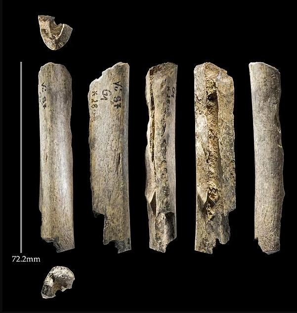 The bone fragments studied, including one that was newly identified as belonging to Neanderthals through a novel technique called ZooMS
