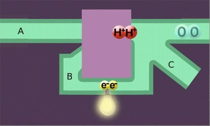 In a PEM fuel cell, the hydrogen is fed by a tank from (A); their electrons are extracted and forced into (B), where their movement generates electricity; the parts later react with oxygen to form water, in part expelled (C) and in part used to cool the device.
