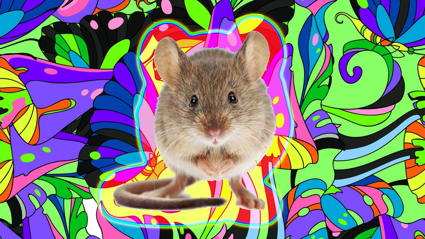The research offers insight into what happens to our brain when we visually hallucinate (Credit: Background: d-naya. Mouse:  icefront /Depositphotos)