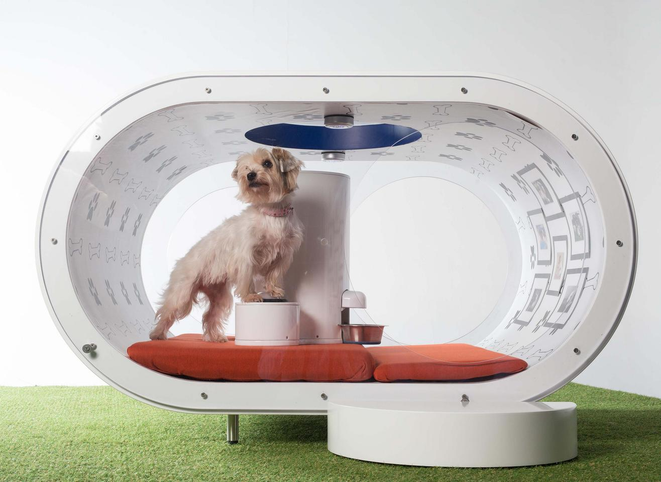 Samsung's Dream Doghouse, with occupant
