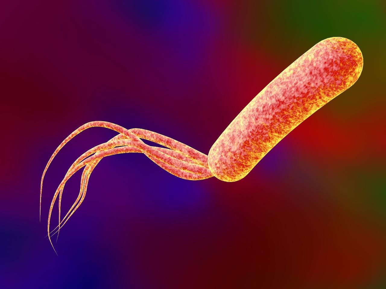 A rendering of a Pseudomonas aeruginosa bacterium