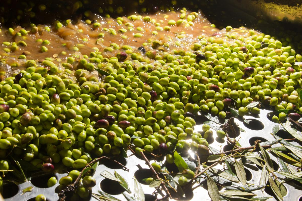 Olive mills don't just produce oil – they also generate a lot of wastewater