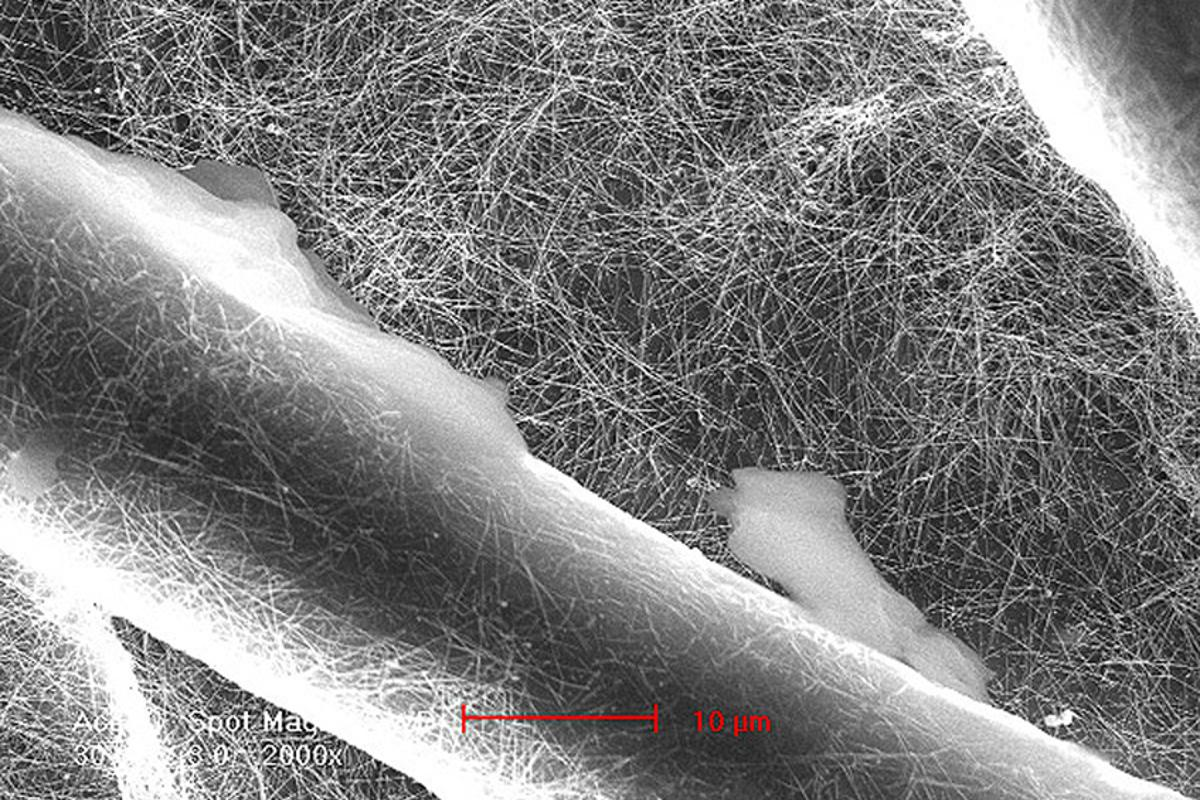 SEM image of the silver nanowires in which the cotton is dipped during the process of constructing a filter – the large fibers are cotton (Image: Yi Cui)